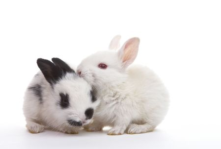 pelage: view of  nice lonely  little  rabbits on white back Stock Photo