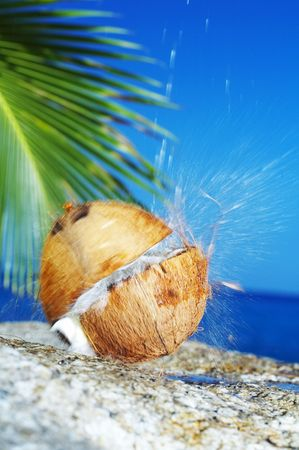sputter: view of coconut getting cracked against shore boulder