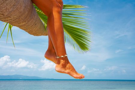 twiddle: view of nice smooth woman�s legs hanging from the palm