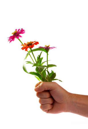 human fist: view of human fist with bouquet of nice colorful flowers in it Stock Photo