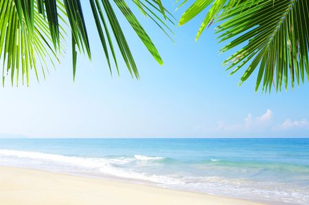 furlough: View of nice tropical empty sandy beach with some palm