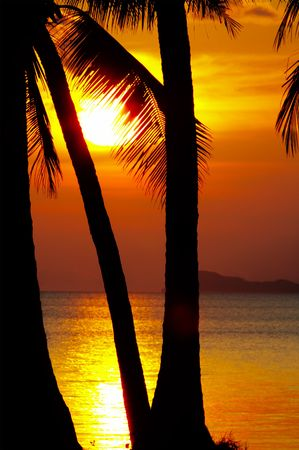calmness: view of palm black outlines on the beach during sunset  Stock Photo
