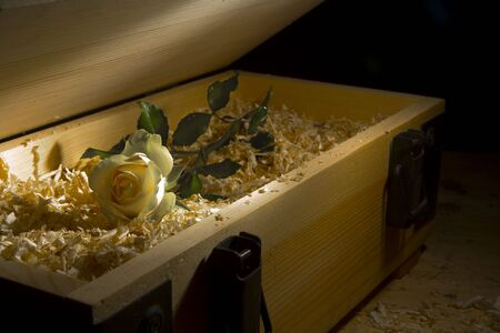 cuttings: View of nice fresh rose delivered in cuttings filled wooden box