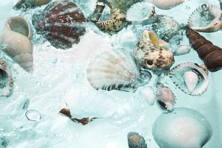 Close up view of different kind of shells  on splashing water background