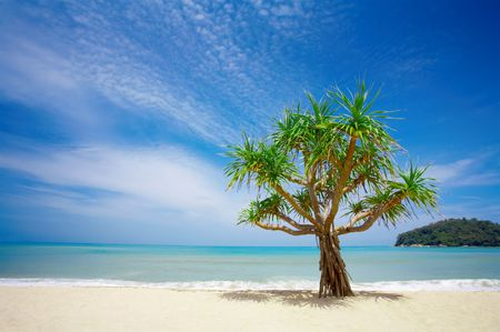 mangrove: View of nice empty sandy beach with a mangrove tree in the middle Stock Photo
