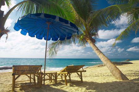 soltería: Ver exóticas de bambú de dos salones y persecución paraguas azul