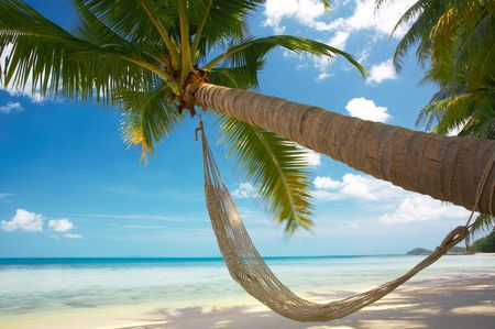 view of nice exotic hammock hanging in tropical environment
