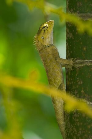 crawler: View of nice colorful lizard in summer environment
