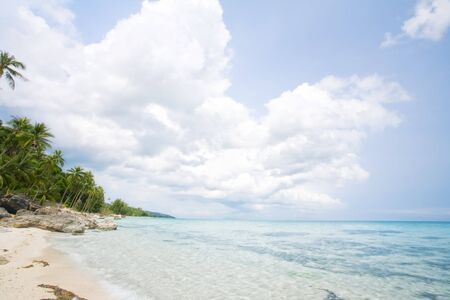 cerulean: View of nice tropical empty sandy beach with some palm
