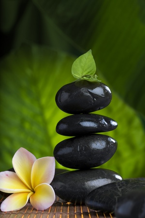 close up view of  gray stones  and flower  on color back Stock Photo - 8377858
