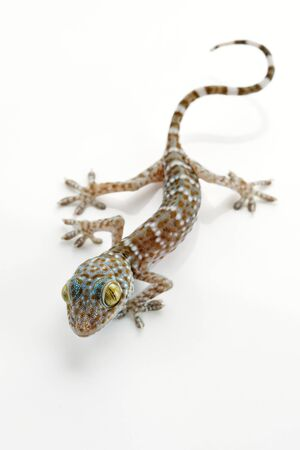 salamander: Close up vista bella lucertola colorata sul retro bianco