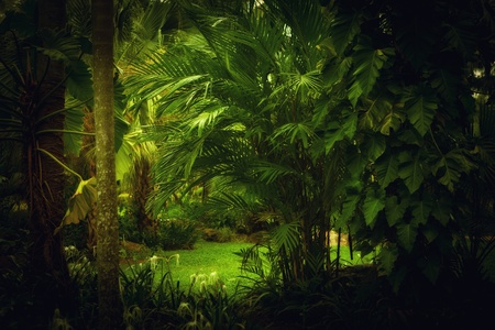 palm garden: color  view of nice color misty  tropical jungle Stock Photo