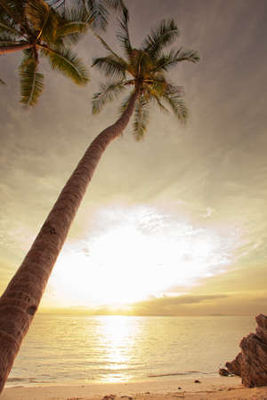 crepuscular: view of nice tropical beach during  colorful  sunsetl