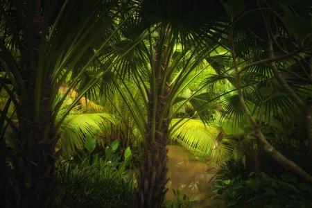 selva: vista de color de selva tropical brumoso color bonito