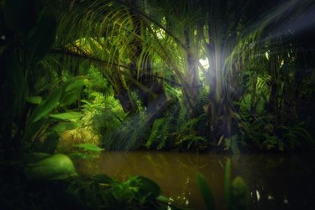 selva: color agradable vista de la selva tropical brumoso color Foto de archivo