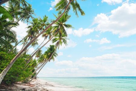 plage: View of nice tropical  beach  with some palms  Stock Photo
