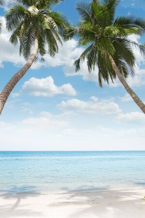 View of nice tropical  beach  with some palms  Stock Photo - 10725070