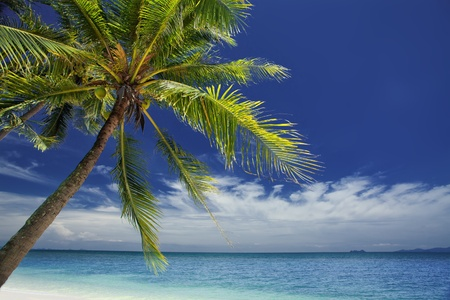 maldives island: View of nice tropical  beach  with some palms around  Stock Photo