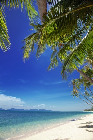 caribbean cruise: View of nice tropical  beach  with some palms around  Stock Photo
