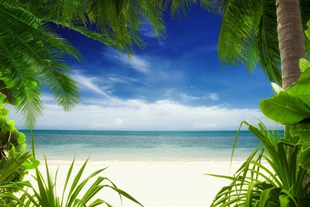 plage: View of nice tropical  beach  with some palms around  Stock Photo