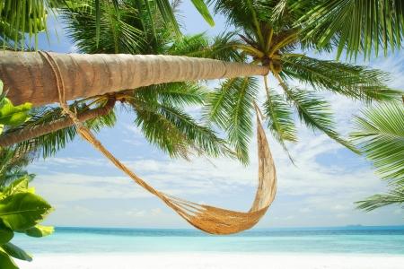 Blick auf schöne Hügel mit Palmen herum in tropischer Umgebung