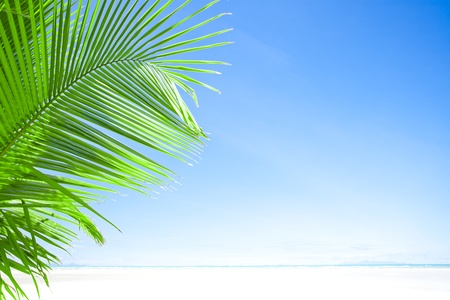 plage: View of nice tropical  beach  with one lonely palm Stock Photo