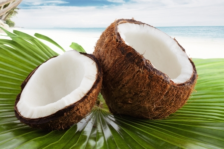 husk: Close up view of nice fresh coconut in tropical environment