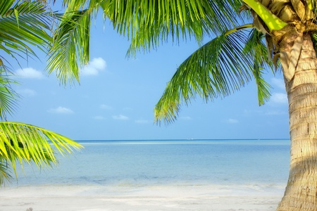 view of nice green  tropical palms on blue sky back Stock Photo