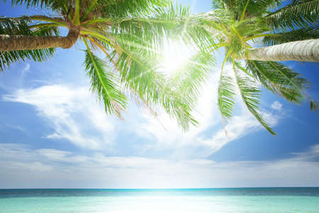 maldives island: View of nice tropical  beach  with some palms around