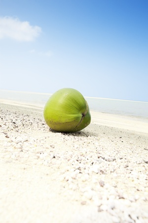 maldives island: View of nice tropical  beach  with coconut close up