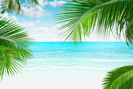 View of nice tropical  beach  with some palms around    cruise, bay, shore, shoreline,  palm,  coast, waterside, beach, plage,