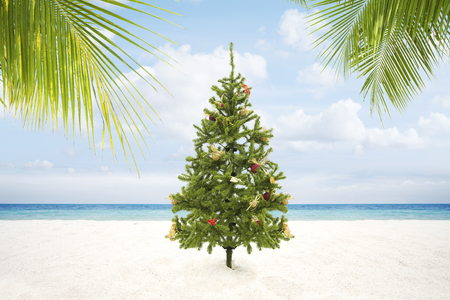 view of Christmas tree on wild empty tropical beach 写真素材