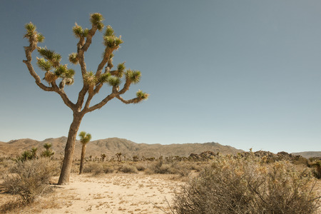 joshua: view of the rocks and trees in Joshua tree national park Stock Photo
