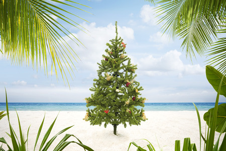 view of Christmas tree on wild empty tropical beach Stockfoto