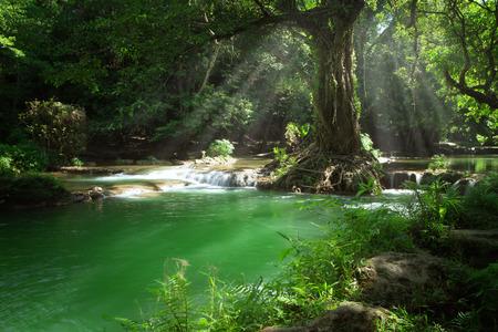 녹색 열대 환경에서 멋진 폭포와 연못의 파노라마보기 스톡 콘텐츠