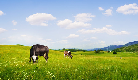 sows: panoramic view of nice green hill with sows on blue sky background Stock Photo