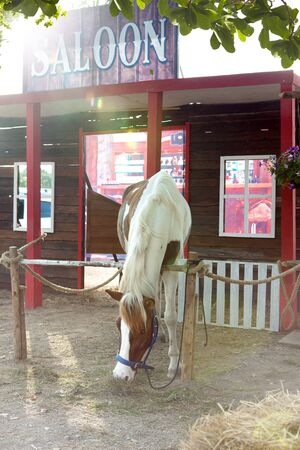 outlaws: photograph of nice horse hanging out in summer environment