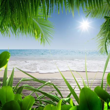 caribbean beach: View of nice tropical beach with some palms Stock Photo