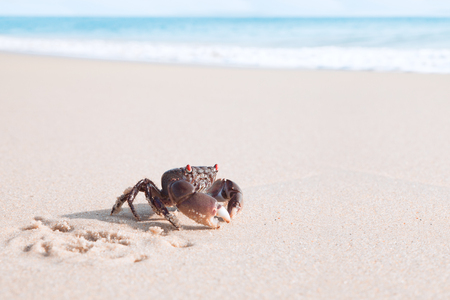 Close up view of  nice Crab is crawling  on a tropical beach. Stock Photo