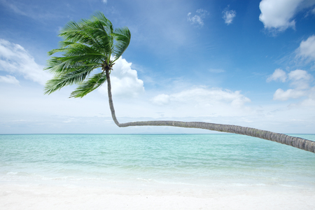 cerulean: View of nice tropical beach with some palm