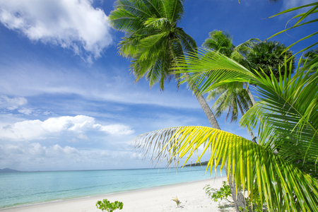 cerulean: View of nice tropical beach with some palms Stock Photo