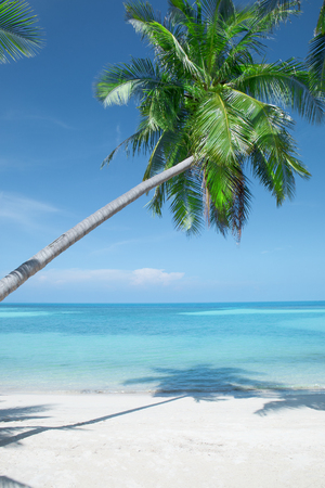 View of nice tropical beach with some palms Standard-Bild