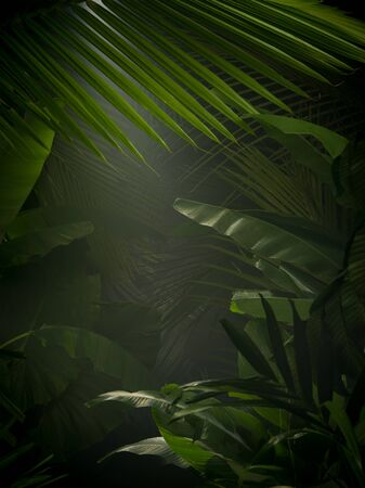 fragment view of nice mist  green tropical jungle