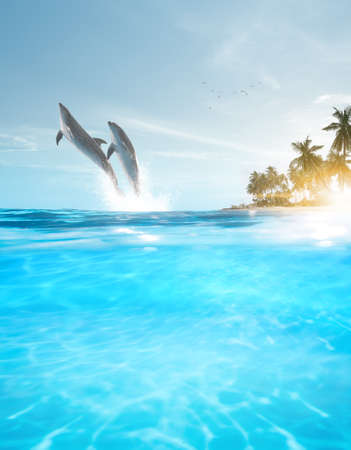 View of a couple dolphin swimming in blue crystal water
