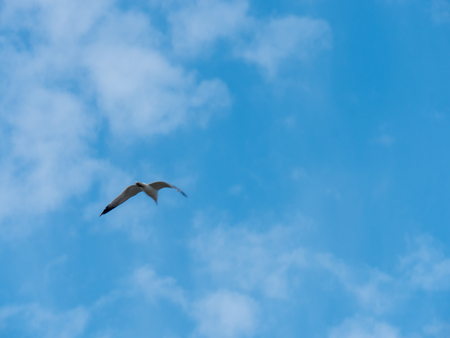 Single seagull flying in a blue sky with clouds background