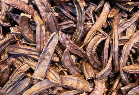 lot of Dry pods of Ceratonia siliqua, commonly known as the carob tree, St John's-bread, or locust bean