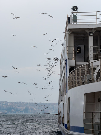 A lot of Seagulls flying near the ferry in izmir, Turkey