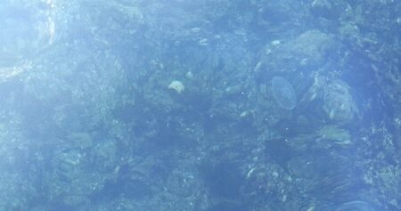 Jellyfish floating or swimming under the sea water at sunny day. Top view. Marine life. Seabed. Mediterranian sea.