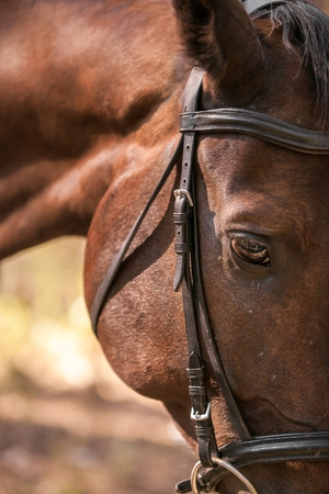 Portrait of nice  horse in the nature photo