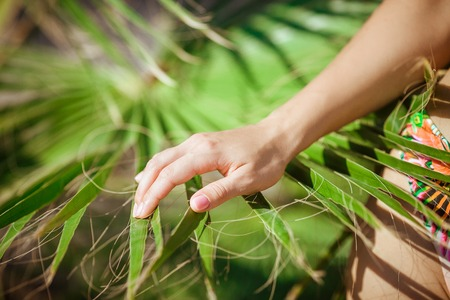 conservationist: female hand is touching a palm branch
